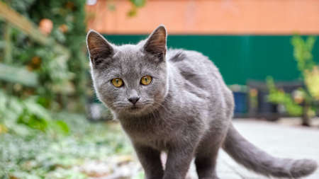 gray kitten playing with a blade of grass in the hand of a man sitting on paving stones.