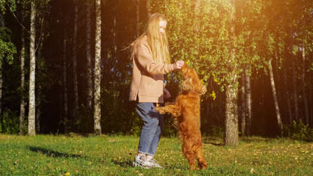 Teenage girl with long fair hair plays with spaniel puppy on green meadow against trees on autumn day 스톡 콘텐츠