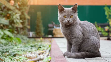gray kitten is washed while sitting on a paving trail in the garden. 스톡 콘텐츠