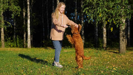 Schoolgirl with long fair hair plays with Russian spaniel puppy on green meadow against birch trees on autumn day