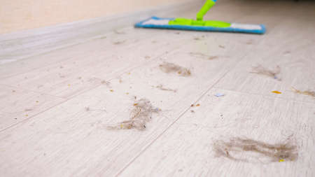 Cleaning modern wooden floor from shreds of hair, dust and dirt with soft mop in room during tidying up