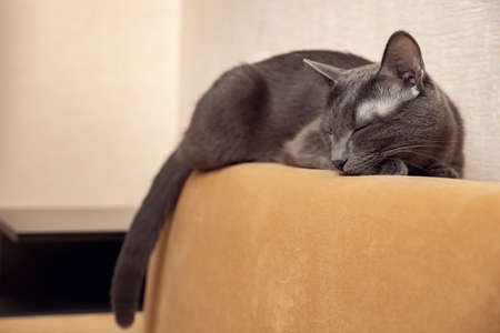Gray cat sleeps on a mustard-colored sofa.
