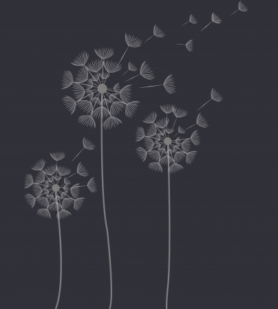 abstract dandelion Vector