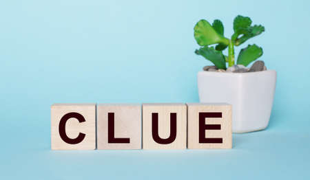 The word CLUE is written on wooden cubes near a flower in a pot on a light blue background.