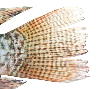 fishtail: Close-up fishtail isolated on white Stock Photo