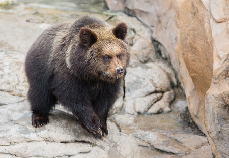 cruel zoo: Brown bear,One of the world s most ferocious animals