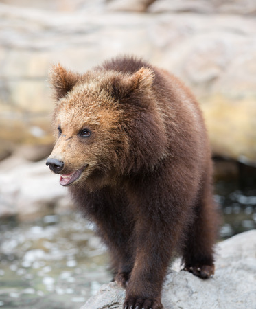 bear s: Brown bear,One of the world s most ferocious animals