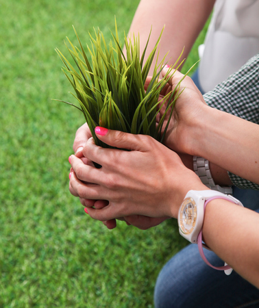 hands holding plant: Close-up of people hands holding plant together