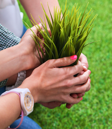 hands holding plant: Close-up of people hands holding plant together .
