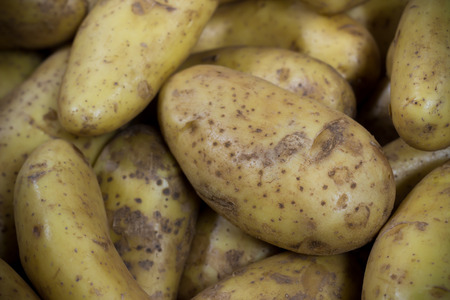 russet potato: Clean Russet Potato Stock Photo
