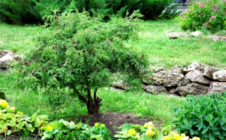 Beautiful tree and flowers in the garden of stones photo