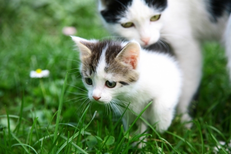 Mother cat and kitten on the morning walk photo