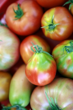 Fresh tomatoes just from garden photo