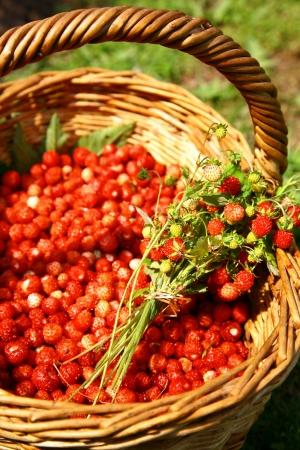 Bouquet of wild strawberries in a wicker basket photo
