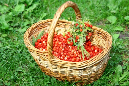 Basket of wild strawberries on the grass in sunlight Stock Photo - 14859778
