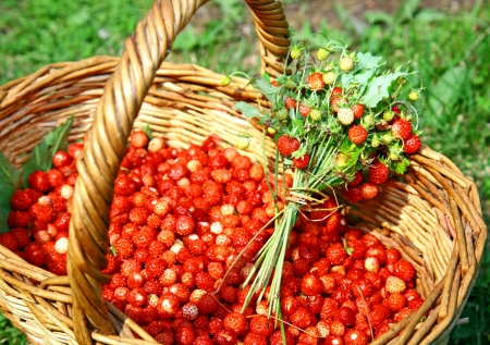 Fresh bouquet of forest strawberries photo