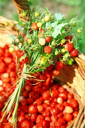 Fresh bouquet of wild forest strawberries photo