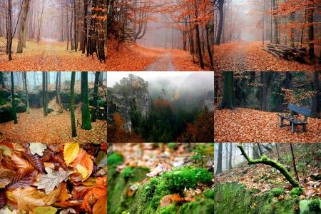 10 月の黄金色の秋の森林チェコ楽園