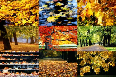 Golden autumn in pictures photo
