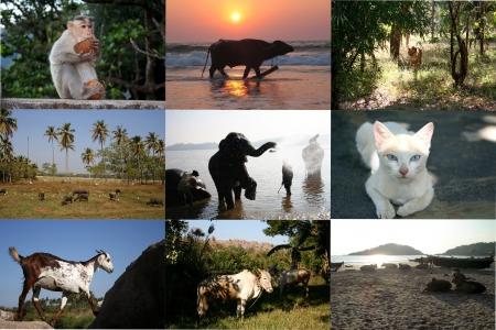 インドの動物の写真