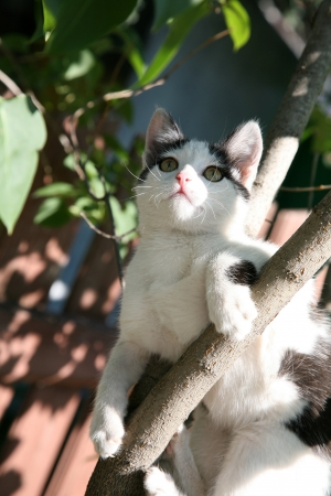 Kitten playing in a tree in the summer garden photo
