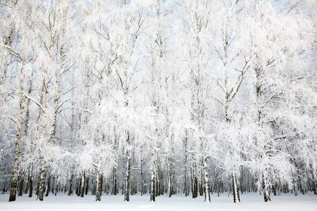 Russian winter photo