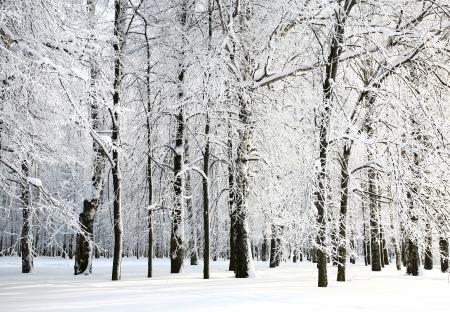 日光の下でロシアの冬の美しい雪枝