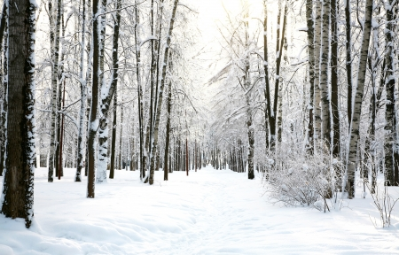 Sun in the winter forest Stock Photo