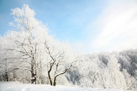 Beautiful snow forest on blue sky background photo