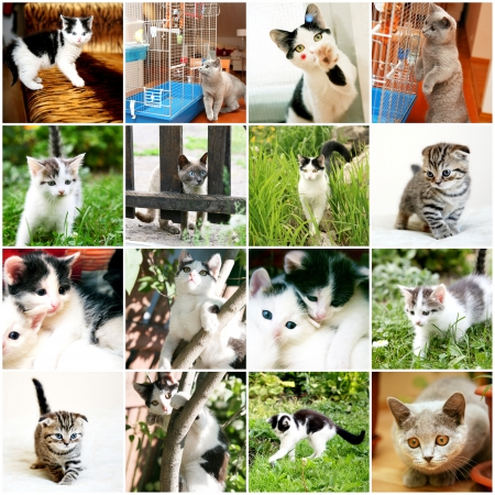 Collection of different funny kitten Stock Photo - 19020803