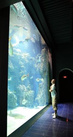 fish exhibition: Man near aquarium with exotic fish in famous Oceanographic Museum Monaco