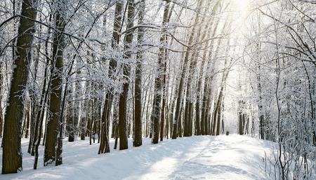 Path in sunny winter forest photo