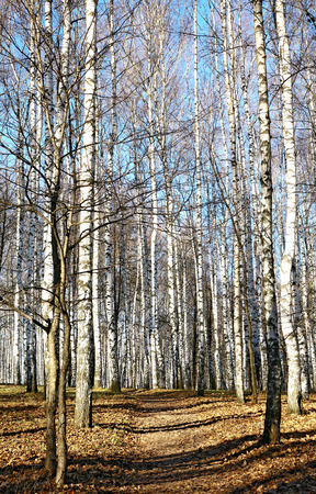 Autumn forest in sunny weather photo