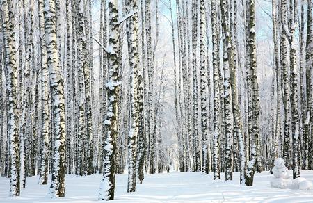 Winter forest in sunlight