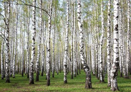 最初の緑の木