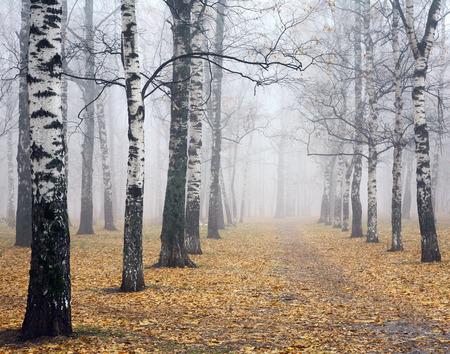deeply: Pathway in deeply mist autumn birch park