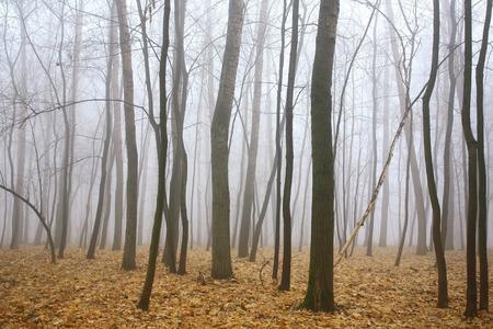 朝霧秋の森 写真素材