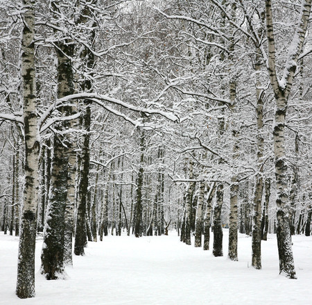 Alley with winter trees photo
