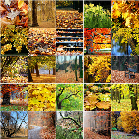 red maple leaf: Colorful collage of autumn trees Leaves
