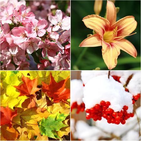 Collage of four seasons Stock Photo