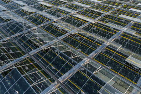 Aerial top view of greenhouse plant. Agronomy, year-round climate control and yield, indoor farming, heat recovery, power consumption and organic plant protection concept. Background image, copy space