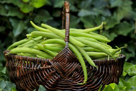 Basket of green beans Stock Photo - 7646213