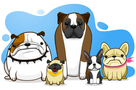 dog, bull dog, pug, boxer, French Bull Dog, Boston Terrier