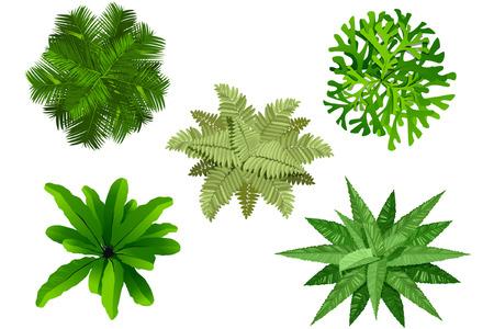 plan de jardín, vista superior del árbol  Ilustración de vector