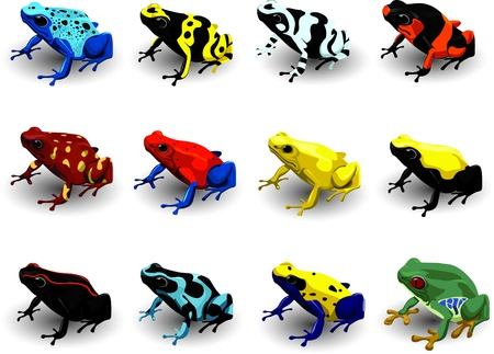 poison dart frogs: Set Poison Arrow Frog Vector Illustration