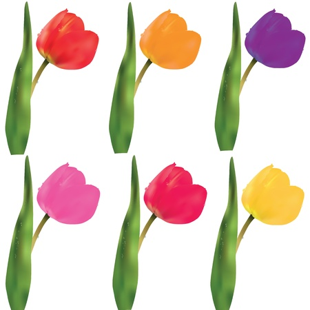 A set of colorful tulips on a white background