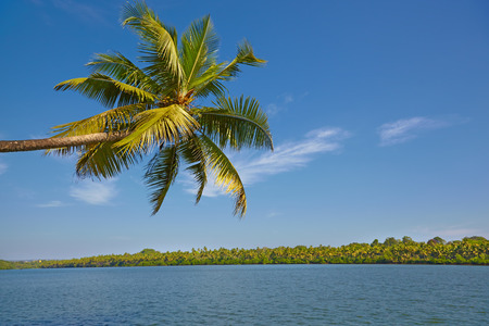 Beautiful palm tree on tropical river Stock Photo