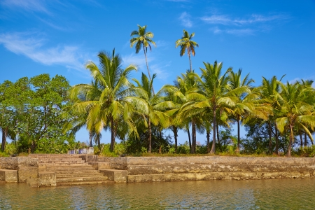 Tropical landscape with palm tree. GOA, Chapora River