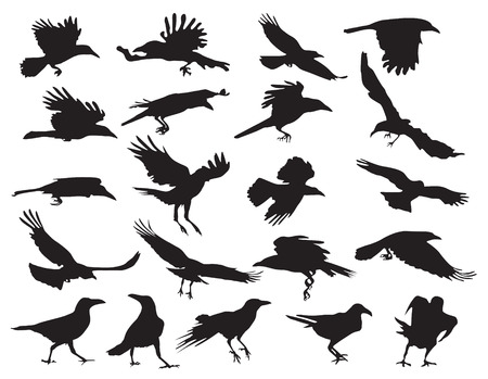 Moving silhouettes of crows on a white background. Set of vector illustrations. EPS 10. Vector