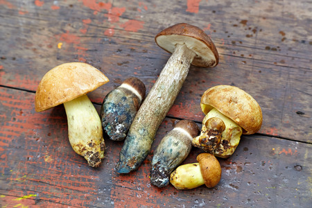 Edible mushrooms of different kind on a vintage wooden background. Stock Photo